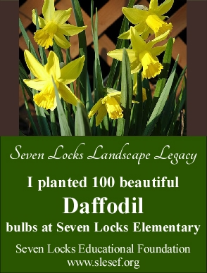 daffodil 100 legacy cards - single card