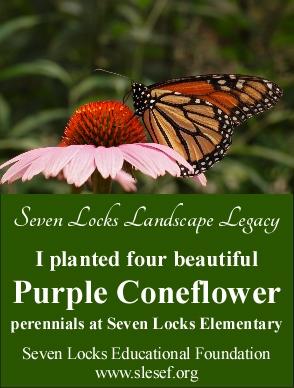 purple coneflower 4 legacy cards - single card