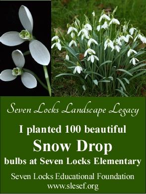 snow drop 100 legacy cards - single card