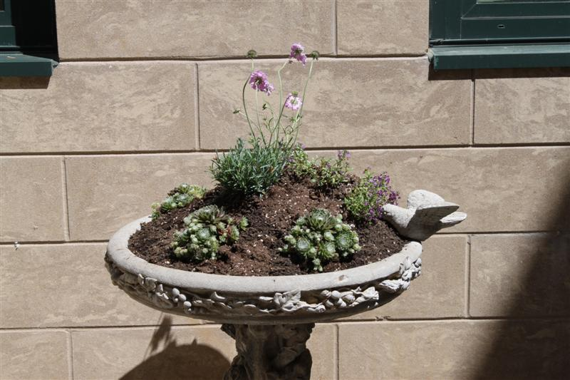 AFTER PHOTO - Close-up of birdbath found in storage and turned into a planter.